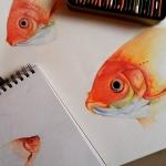 Ilustración científica - Técnica prismacolor